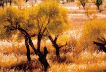 大漠豪情 逍遥在克拉玛依